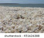 Shell Beach Shark Bay  Western...
