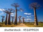 famous avenida de baobab near... | Shutterstock . vector #451699024