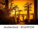 sunset in the famous avenida de ... | Shutterstock . vector #451699150