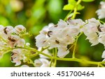 bee and white confederation... | Shutterstock . vector #451700464