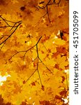 bright autumn leaves in the... | Shutterstock . vector #451705099