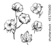 hand drawn cotton plant in... | Shutterstock . vector #451705600