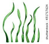 Seaweed  Green Grass  Plant ...