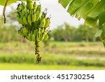 Bunch Of Organic Bananas On...