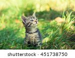 Stock photo cute kitten walking on the grass 451738750