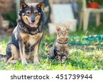 Stock photo cat and dog sitting together in the yard 451739944