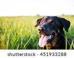 A Happy Boucheron Dog On A...