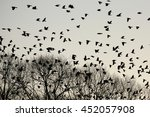 Silhouettes Of Crows Flying...