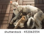Mother Cat Breastfeeding Her...