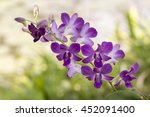 orchid. red orchid. orchid is... | Shutterstock . vector #452091400