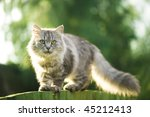 cat | Shutterstock . vector #45212413