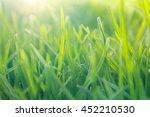 soft focus green grass... | Shutterstock . vector #452210530