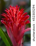 Small photo of Bromeliads flower (Aechmea fasciata),Soft focus