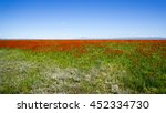 Small photo of Poppy field scattered all over the place