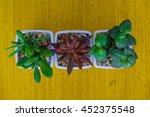 cactus on wood background | Shutterstock . vector #452375548