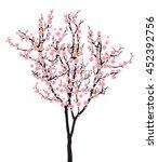 Full Bloom Pink Sakura Tree ...