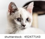 Stock photo white kitten 452477143