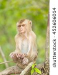 the monkey live in the forest ... | Shutterstock . vector #452606014