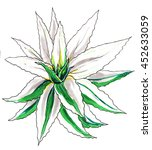 white aloe vera cactus. hand...   Shutterstock . vector #452633059