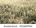 photographed close up young... | Shutterstock . vector #452685904