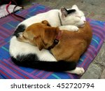 Dog And Cat Curled Up Like Yin...