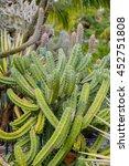Cactus  Plants  Desert Plants...