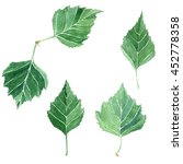 leaves set  collection of hand... | Shutterstock . vector #452778358