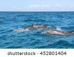 Group Of Wild Dolphins Swimmin...
