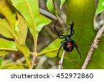 black widow spider | Shutterstock . vector #452972860