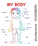 "my body""  educational info... | Shutterstock .eps vector #453008890"