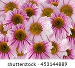 echinacea oil painting | Shutterstock . vector #453144889