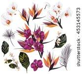 a collection of vector tropical ... | Shutterstock .eps vector #453145573