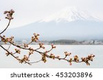 sakura blooming and background... | Shutterstock . vector #453203896