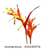 bird of paradise flowers... | Shutterstock . vector #453240976
