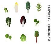 set of salad bowl. leafy... | Shutterstock . vector #453302953