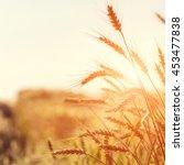 golden ears of wheat or rye on... | Shutterstock . vector #453477838