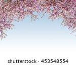 pink flower blossom frame with... | Shutterstock . vector #453548554