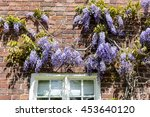 Blue Wisteria Against The Wall...