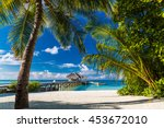 beautiful palm trees and... | Shutterstock . vector #453672010