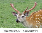 Bust Of Spotted Deer On Green...