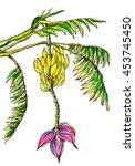 bananas fruits on banana tree...   Shutterstock . vector #453745450