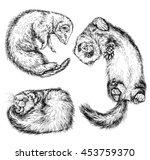 drawing of ferret  vector...   Shutterstock .eps vector #453759370