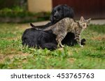 Stock photo cat and dog playing together on yard as the best friends 453765763