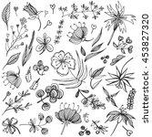 natural design elements big... | Shutterstock .eps vector #453827320