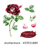 hand drawn watercolor... | Shutterstock . vector #453921880