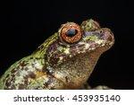 tree frog  tree frog of borneo  ...   Shutterstock . vector #453935140