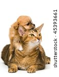 Stock photo puppy with a cat in studio 45393661