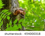 Stock photo animals in wildlife amazing picture of beautiful sunny squirrel sitting on a high tree with green 454000318