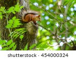 animals in wildlife. amazing... | Shutterstock . vector #454000324
