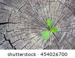 ecology concept. rising sprout...   Shutterstock . vector #454026700